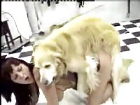 Beastiality sex video features amateur whore creampied by dog so she can capture and taste it