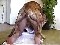 Retired young Judge bends over with his boxers off and enjoys getting anal fucked by animal