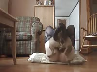 Wanting married whore wearing only thigh high stockings during this beastiality sex video
