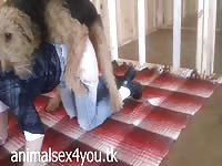 Petite slut with long legs bent over in bottomless jeans and fucked by dog in zoophilia debut
