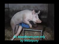 Drunk Russian dad is getting banged by his pig
