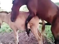 Horse slides it's giant cock up a donkey's hole down at the farm