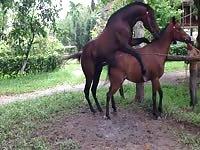 horse mare porn