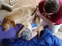 Fuck-hungry brown-haired girl gets banged by her golden retriever