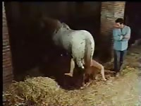 Happy boyfriend witnesses and records the action while his young lover gets fucked by horse