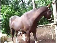 Young girl and a big horse zoo porn horse xxx animals porn