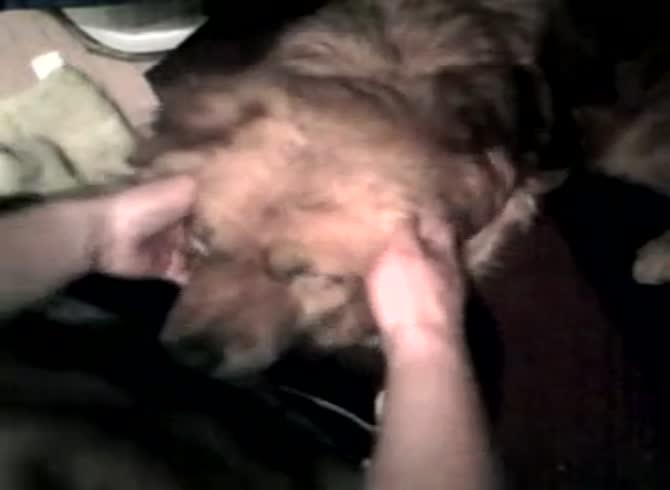 Dog boy fucks i-um.net