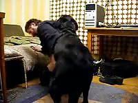 Dog Fuck Me 2 Gay Beast Com - Bestiality Porn Video With Boy