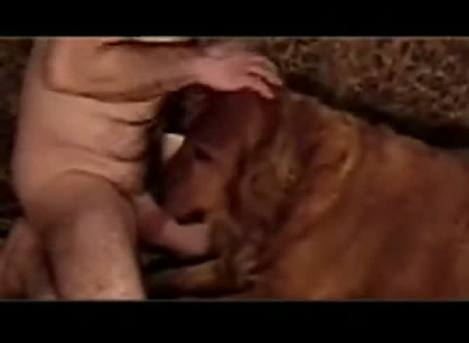 Boy Suck Dog Cock Gaybeast Rip Animal Men Extrem Sex And Taboo