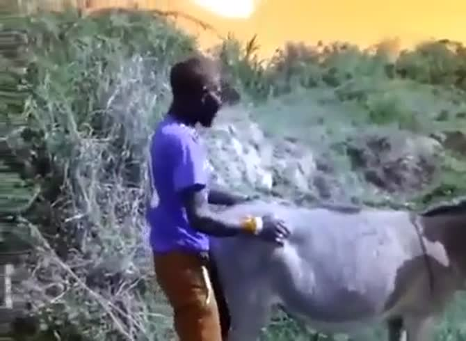 Xxx man on goat stream porn full hd