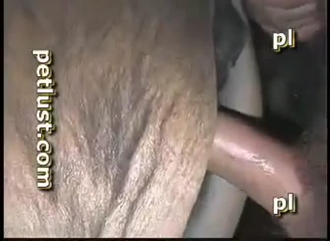Animál sex