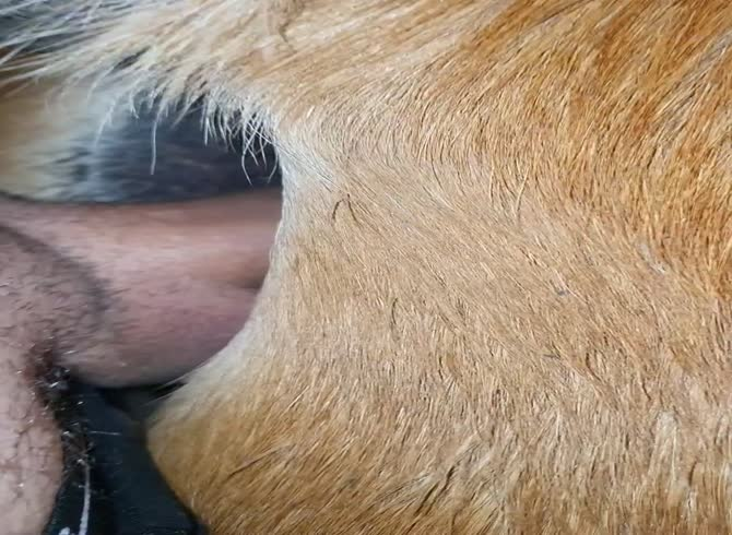 Showing Porn Images for Horse anal sex creampie porn | www ...
